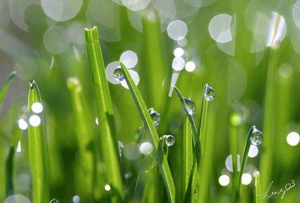 grass-blades