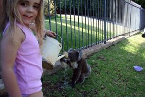 koala72